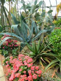 7 curated Centennial Park Conservatory desert garden ideas ...