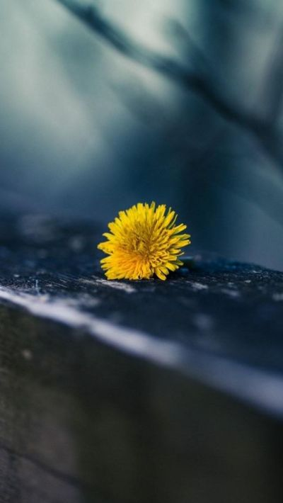 1000+ ideas about Iphone Wallpaper Yellow on Pinterest | iPhone wallpapers, Phone Wallpapers and ...