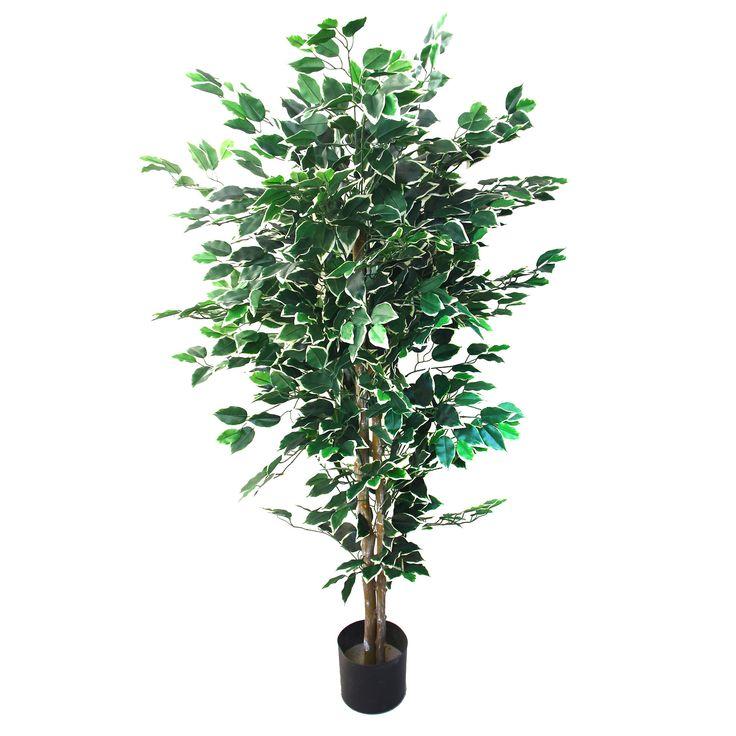 1000+ Ideas About Ficus Tree On Pinterest   Ficus, Indoor Tree