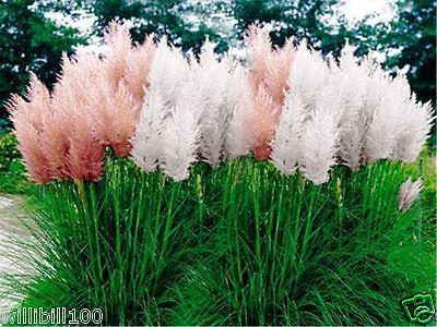 1000+ Ideas About Grass Seed On Pinterest | Planting Grass Seed