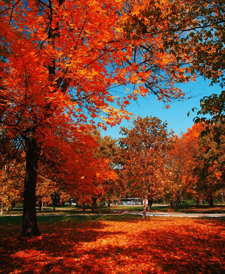 Whimsical Fall Desktop Wallpaper 17 Best Images About Fall Foliage On Pinterest Fiery Red