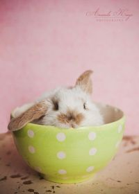 1000+ ideas about Cutest Bunnies on Pinterest | Bunny ...