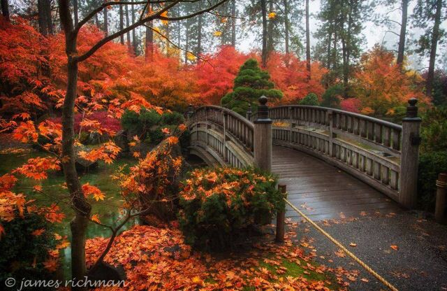Colorado Fall Wallpaper Fall Colors At Nishinomiya Tsutikawa Japanese Gardens