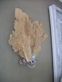 A sea fan sconce. This natural wonder can be part of many ...