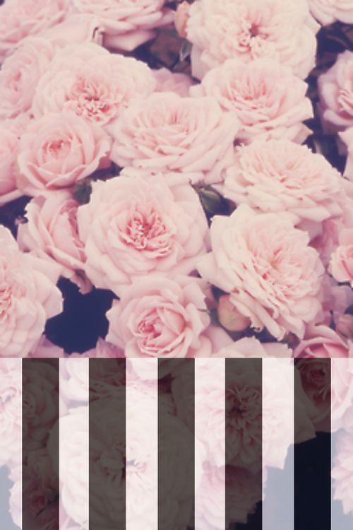 Christian Wallpaper Iphone 6 Stripes Amp Florals Iphone 5 Wallpaper I P H O N E 5 W A L