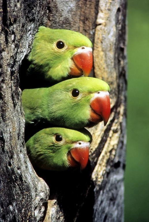 Cute Parakeet Wallpaper 69 Best ♔ Parakeet Amp Pet Bird Health Amp Care ♔ Images On
