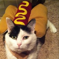 1000+ images about Cats in Costumes on Pinterest | Cute ...
