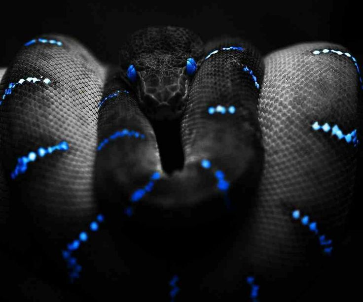 Iphone Wallpaper Trippy Neon Snake Amphibians Reptiles Amp Lizards Pinterest
