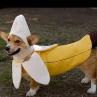 bananasplit dog costume   Ridiculous dog costumes ...