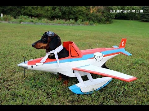 Fall Wallpaper Dog Weenie Best 25 Dachshund Costume Ideas On Pinterest Funny