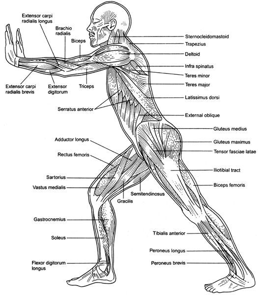 human body diagram plan