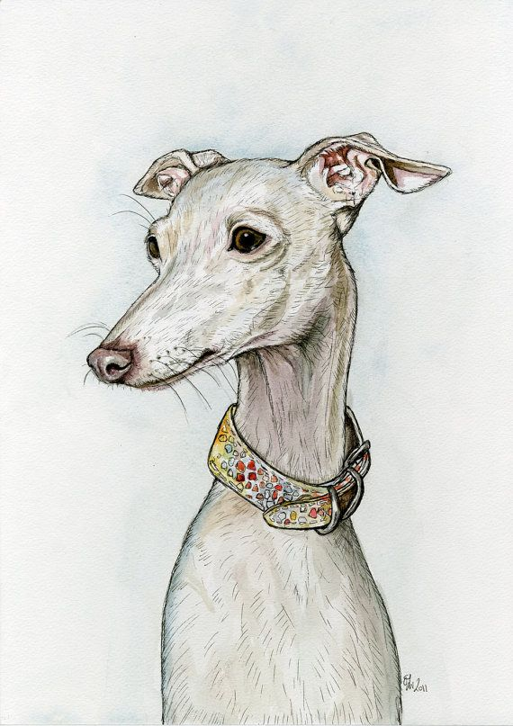 Pet Stroller Houston 141 Best Images About Love My Italian Greyhound Here Are
