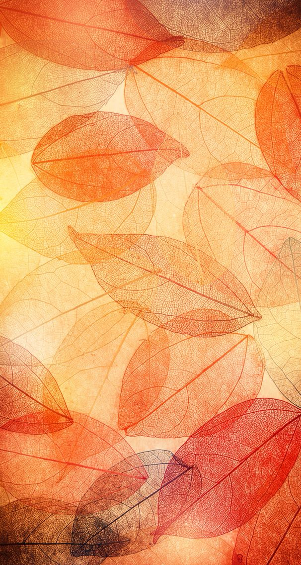 Free Fall Cell Phone Wallpapers Best 25 Fall Wallpaper Ideas On Pinterest