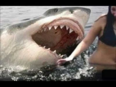 SCARY Shark Attacks ! Caught on tape | Sharks | Pinterest | Shark attacks, Shark and Animal