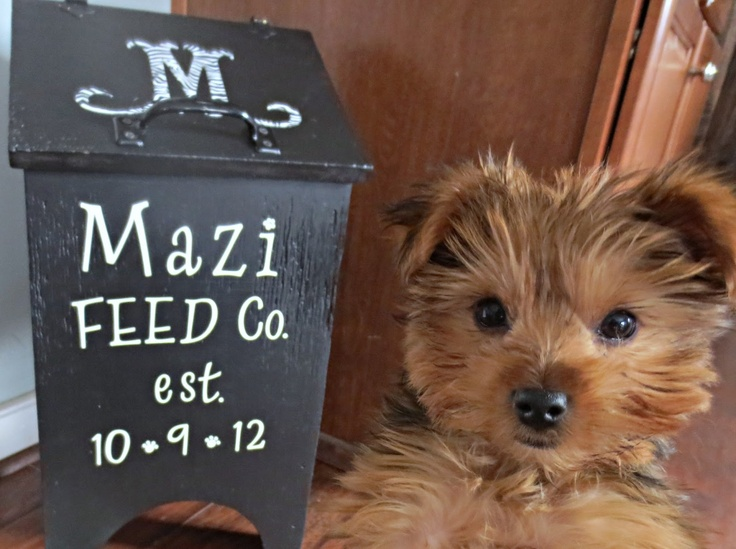 1000 Ideas About Dog Food Containers On Pinterest Dog