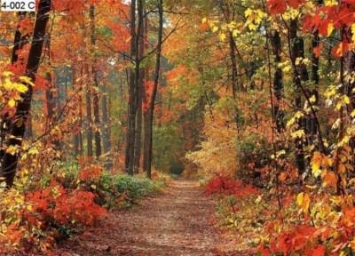 WOODLAND WALL MURALS | Autumn Forest Photo Wall Mural - Photo Wall Murals | GINAS FAVORITES ...