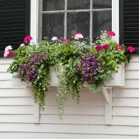 Plant a Better Window-Box Garden | Gardens, Window and Parrots
