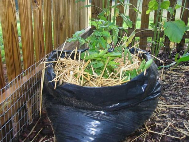 1000+ Ideas About Grow Potatoes On Pinterest   When To Plant