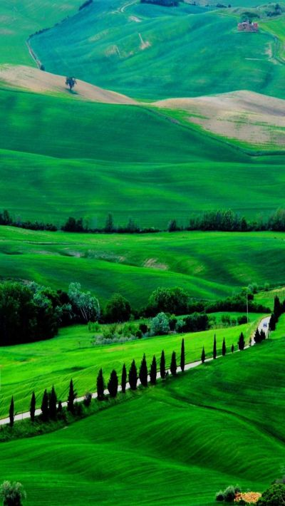 Green view. Collection of Refreshing Green Nature iPhone Wallpapers to live up your Monday! Tap ...