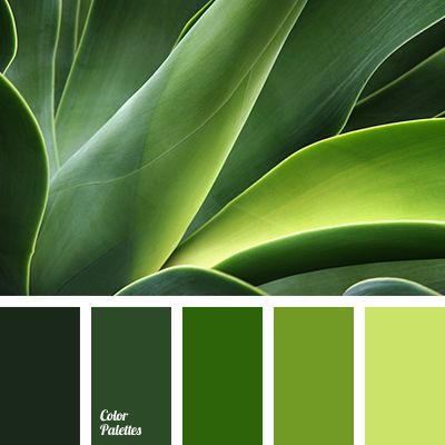17 Best Ideas About Shades Of Green On Pinterest   Accent Colors