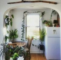 25+ best ideas about Ivy Plants on Pinterest | Small ...