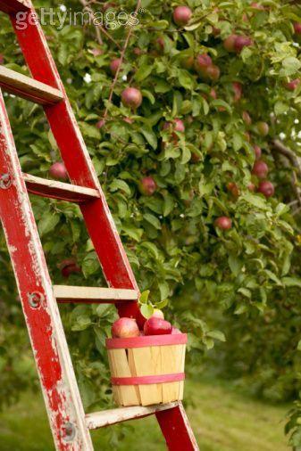 17 Best Ideas About Apple Orchard On Pinterest Buy Apple