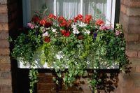 1000+ ideas about Window Box Flowers on Pinterest | Window ...