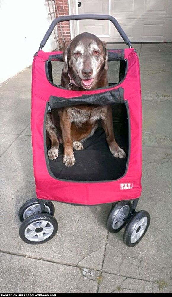 Dog Strollers For Dachshunds 17 Best Images About Strollers For Large Dogs On Pinterest