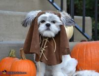 25+ best ideas about Ewok Dog Costume on Pinterest | Funny ...