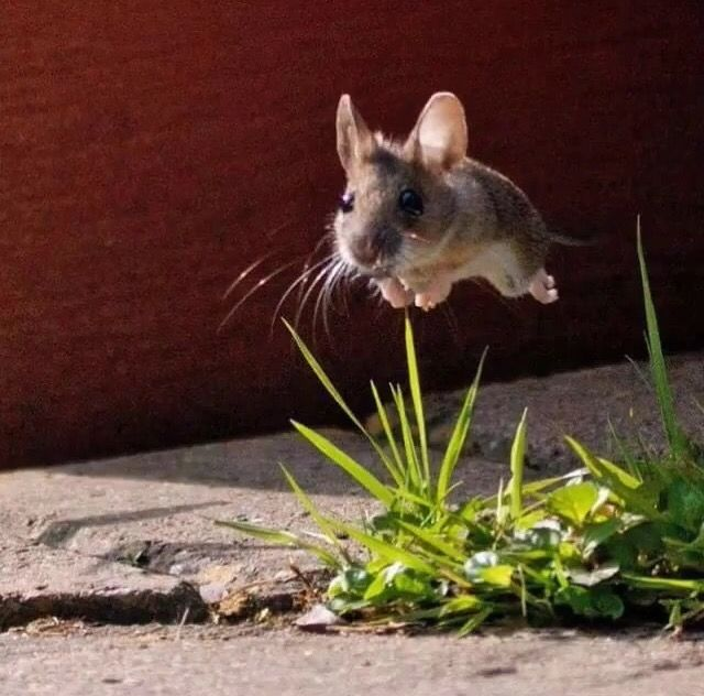 Best Stroller Ireland 17 Best Images About Field Mice On Pinterest The Harvest