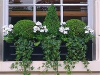 52 best images about Gardening-Window Boxes on Pinterest ...