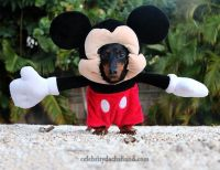 Dachshund Mickey Mouse Costume