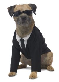 Men in Black dog costume | My dogs are doomed | Pinterest ...