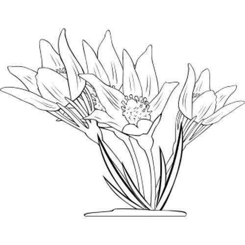 pin kolorowanki wiosna wiosenne kwiaty kolorowanka