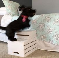 25+ Best Ideas about Dog Stairs on Pinterest | Pet stairs ...