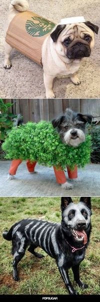 Best 20+ Chia pet ideas on Pinterest | Pet halloween ...