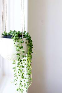 Best 25+ Indoor plant decor ideas on Pinterest   Plant ...
