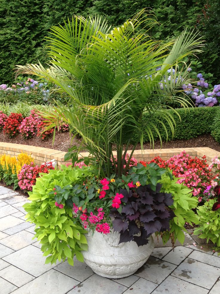17 Best Images About Landscaping With Palm Trees On Pinterest