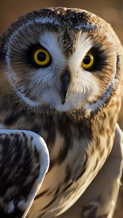 25+ best ideas about Owl Photos on Pinterest | Owls, Beautiful owl and Barn owls