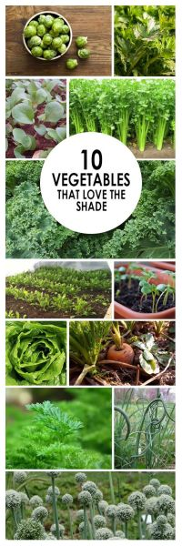 25+ Best Ideas about Apartment Vegetable Garden on ...