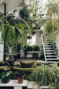 25+ best Plant rooms ideas on Pinterest | Plants indoor ...