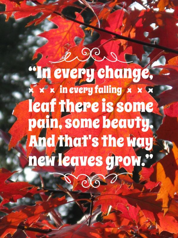Fall Leaves Dancing Wallpaper Best 20 Quotes About Autumn Ideas On Pinterest Fall