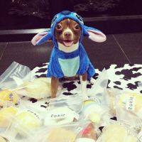 28 best images about Disney Dog Costumes on Pinterest