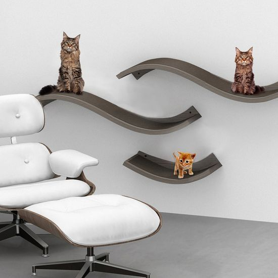 56 Best Cat Wall Shelves Images On Pinterest