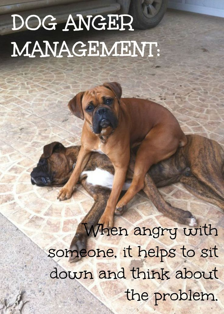Feeling Low Quotes Wallpaper Best 25 Boxer Dog Quotes Ideas On Pinterest Boxer Dogs