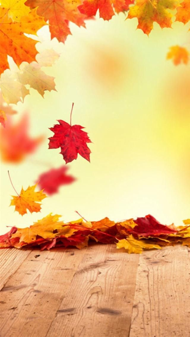 autumn leaves facebook cover