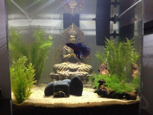 Buddha Zen AquariumThe Buddha, Zen Aquariums, Fish, Buddha Aquariums