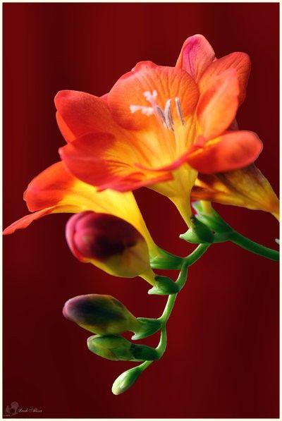 1000+ Ideas About Orange Flowers On Pinterest | Diy Wedding