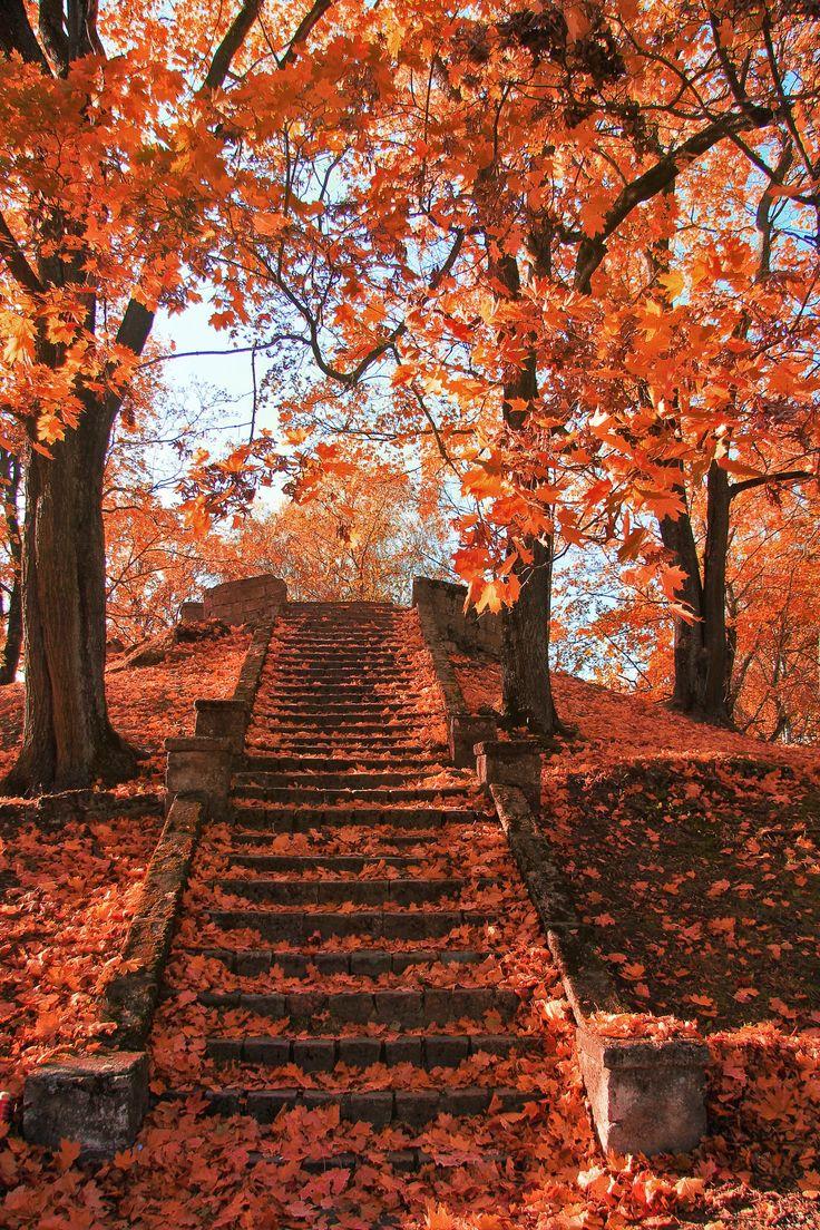 Falling Leaves Live Wallpaper Hd Best 25 Autumn Leaves Ideas On Pinterest Autumn