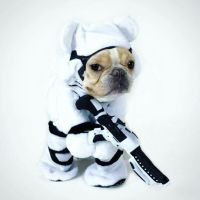 191 best images about Frenchie costumes on Pinterest